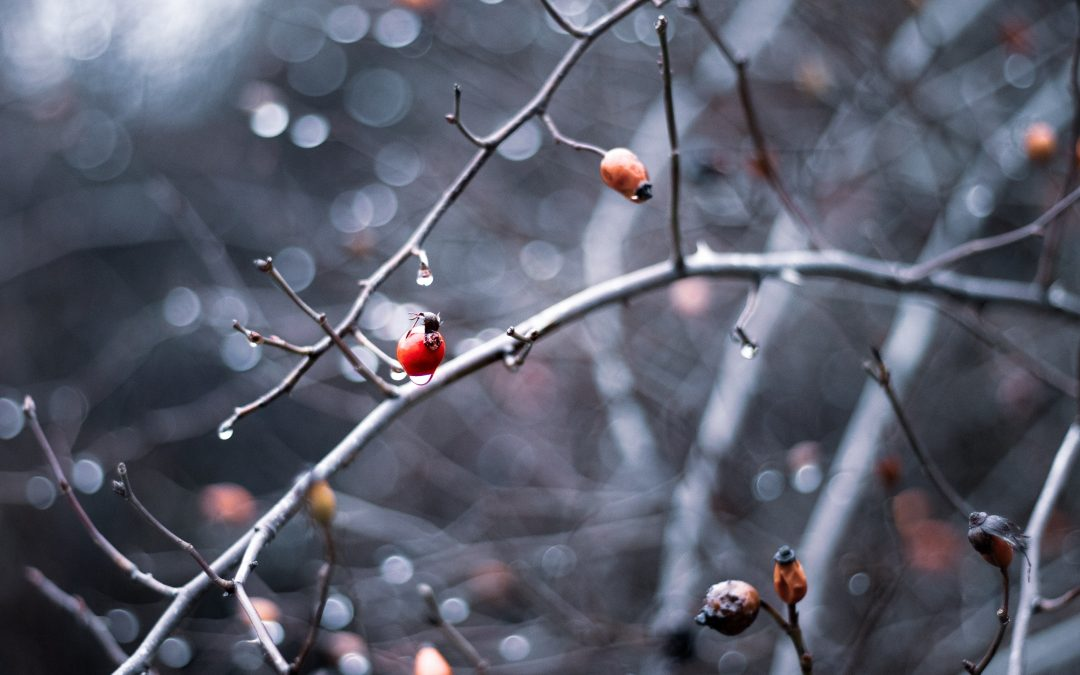 Raving About Rosehips