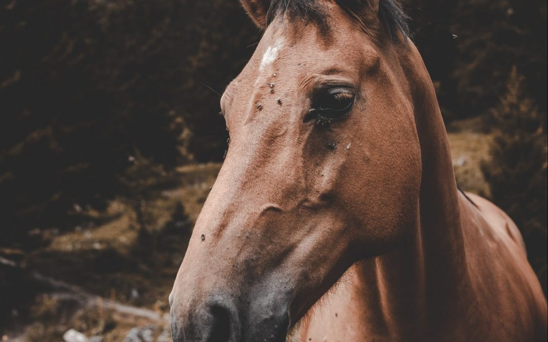 Summer Fly Protection For Horses
