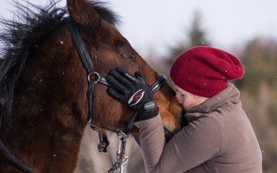 Inclusivity In The Equine World