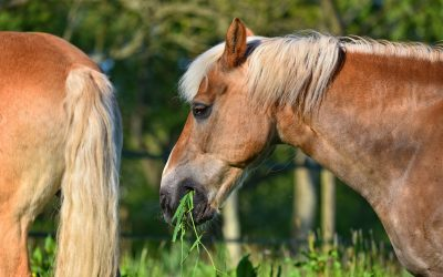 How To Stop People Feeding Your Horse