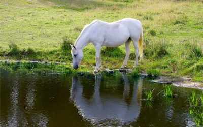 Preventing Dehydration In Horses