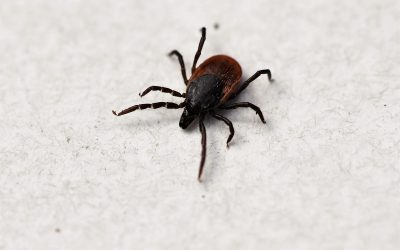 Let's Talk About Ticks