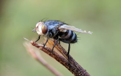 Fly Repellents – What Are They All About?