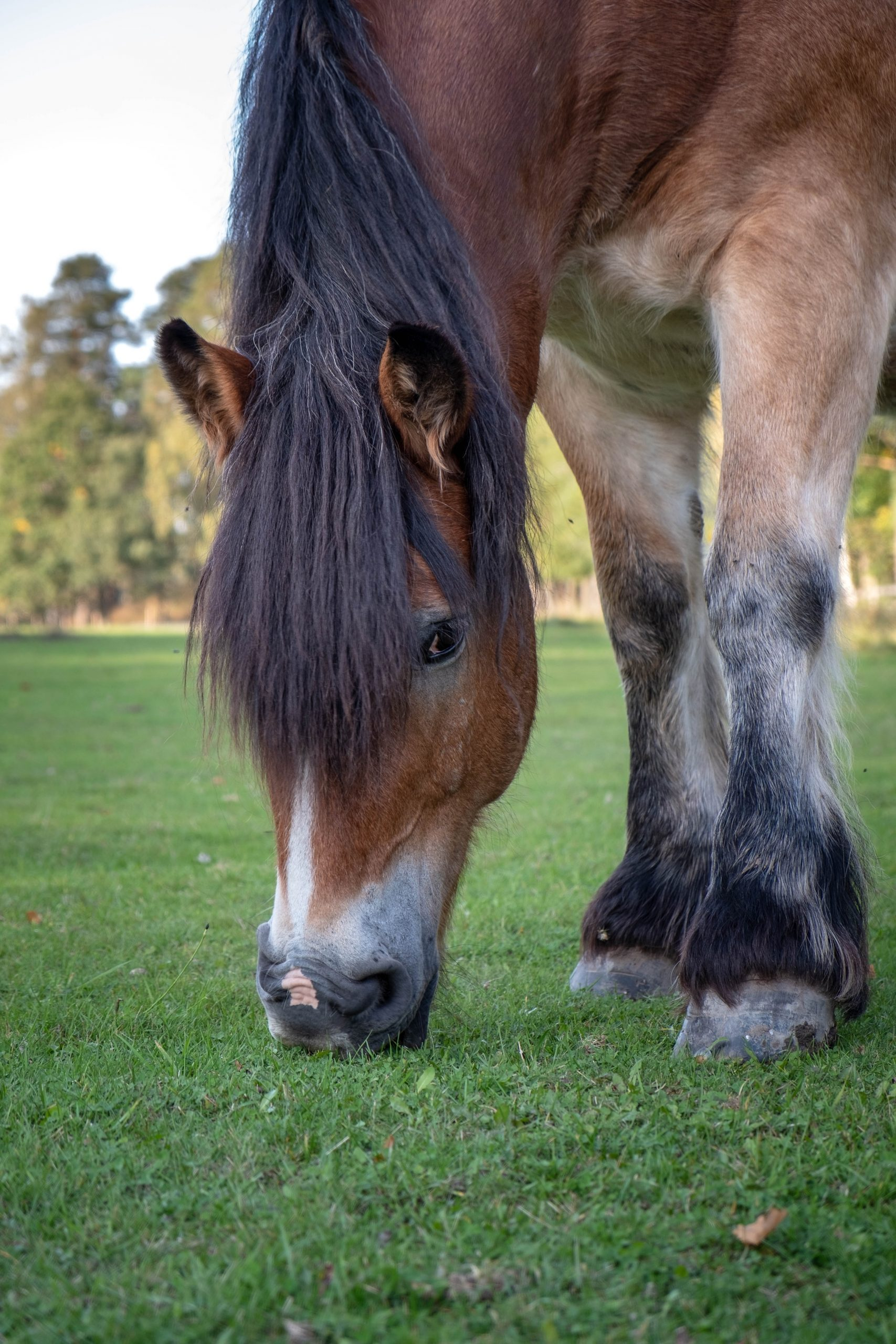 horse joint care