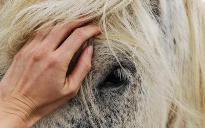 Horse First Aid Kit – What to Include