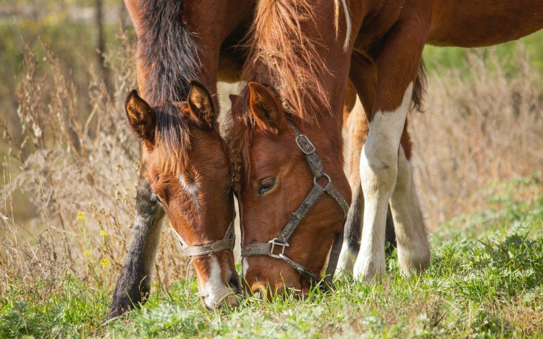 Horse Gut Health