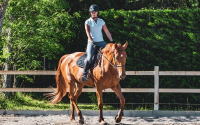 Horse Joint Care & The Best Joint Supplements
