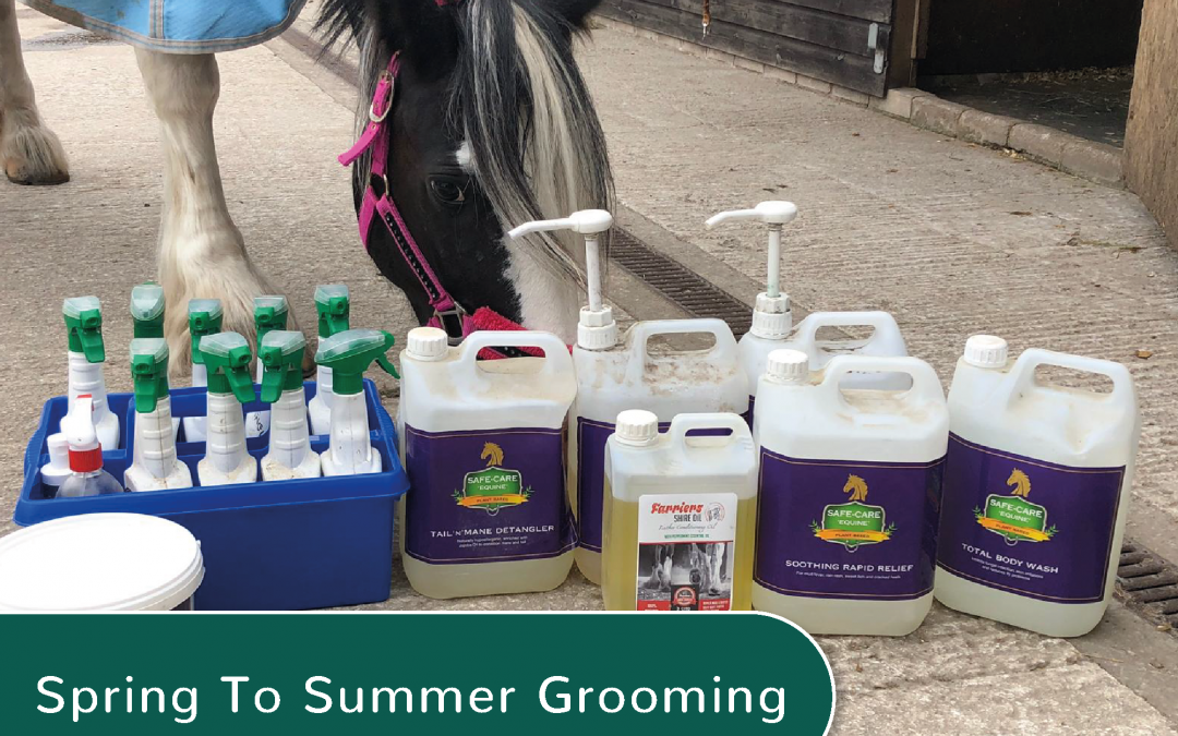 Spring To Summer Grooming